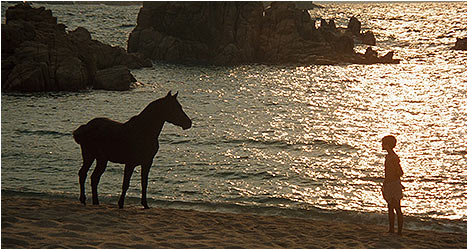 The Black Stallion: Criterion Collection DVD Review